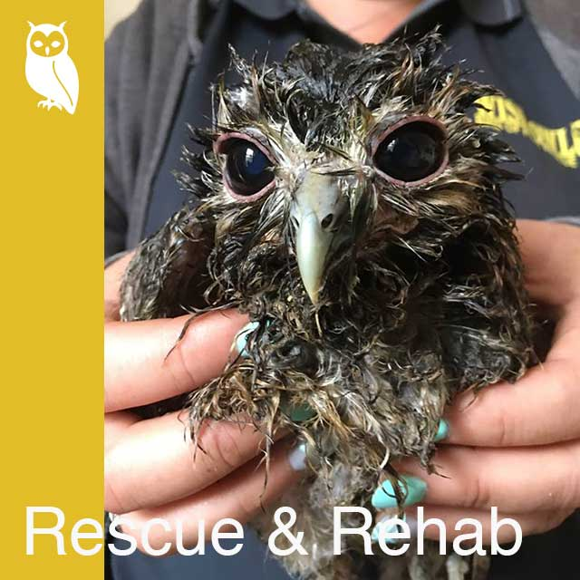 Wise Owl Bird of Prey Rescue, Shows, Visits & Events